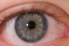 Iris-Diagnostik der Praxis für Osteopathie und Naturheilkunde von Martina Scheunemann in Herne